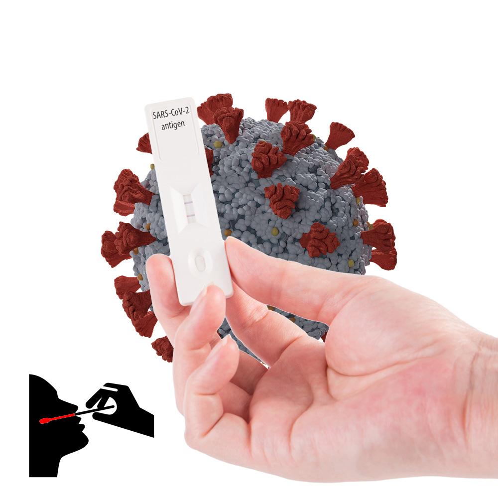 Testy antygenowe na koronawirusa